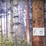 Norge fikk fornyet sin PEFC-sertifisering fram til 2021